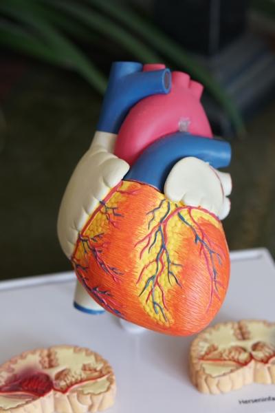 Congestive Heart Failure and SSD Benefits